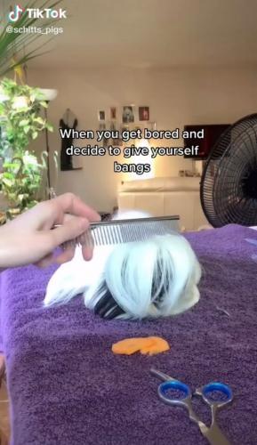 Девушка решила отрезать чёлку своей морской свинке