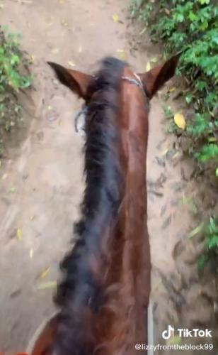 Девушка пошла на вечеринку, а дальше всё как в тумане. Одна в джунглях на лошади в Мексике - это, увы, не сон
