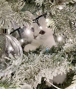Хозяйка показала фото ёлки и подарила загадку зрителям. Найти кота на ней невозможно, как и спасти дерево