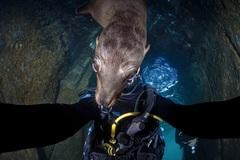 Дайвер делал селфи, когда к нему в кадр влез морской лев. Рядом с этим красавцем понимаешь, кто король фото