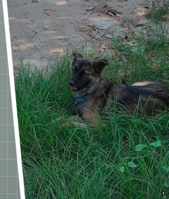 Люди искали сбежавшего пса, но ошибались с самого начала поисков. Питомец всё время ждал на самом видном месте