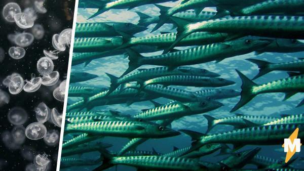 Парень показал на фото рыбу и сломал людей. Ведь они видят в ней контактную линзу, а не морского обитателя