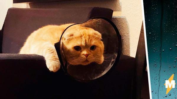 Девушка рассказала диагноз своего кота, но люди не поверили ей. Они считают: у животных не жизнь, а сказка