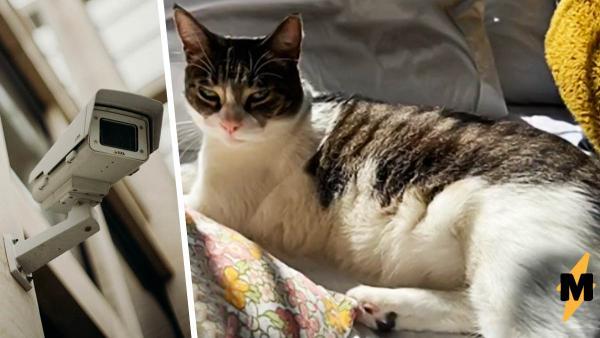 Хозяйка поставила у двери дома камеру и узнала, что её кошка - клептоманка. Правда вкусы у добытчицы так себе