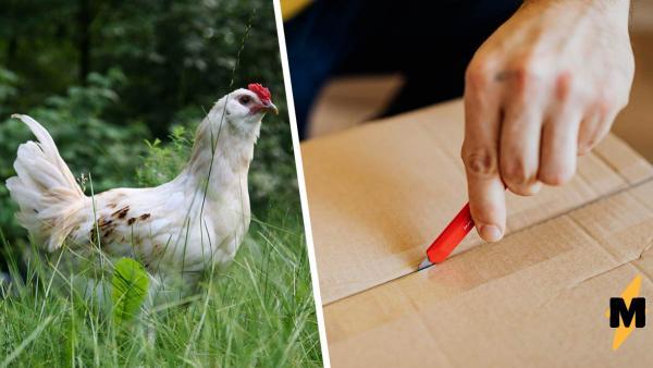 Мужчине под дом подкинули странную коробку с курицей. Птица оказалась живой, и это самый внезапный подкидыш
