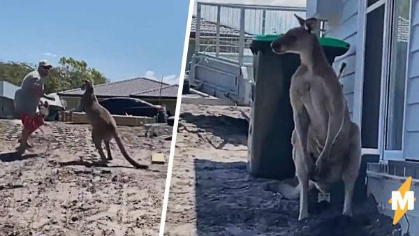 Папаша велел кенгуру уходить, но сделал это без уважения. Теперь у него есть видео с самым неожиданным лещом