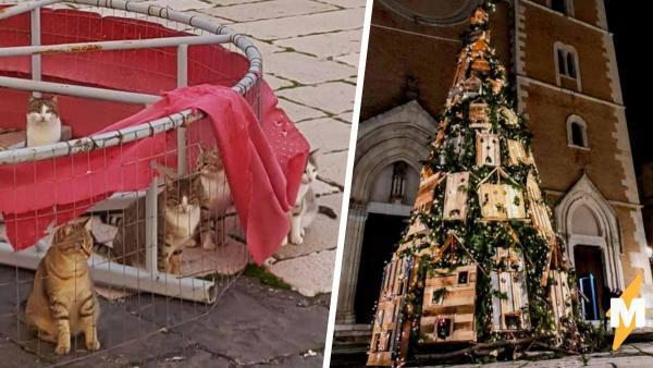 Котики поселились на новогодней ёлке и никто их за это не осудит. Ведь они отлично вписались в антураж