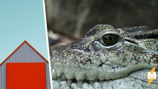 Счастливый брак или 40 лет жизни с крокодилом? Мужчина сделал свой выбор и пока что ни о чём не жалеет