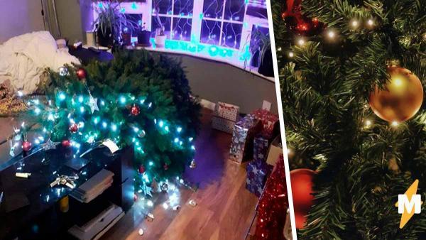 Питомец уронил новогоднюю ёлку хозяев, но это был не кот. Увидев виновника, можно сказать стереотипам пока