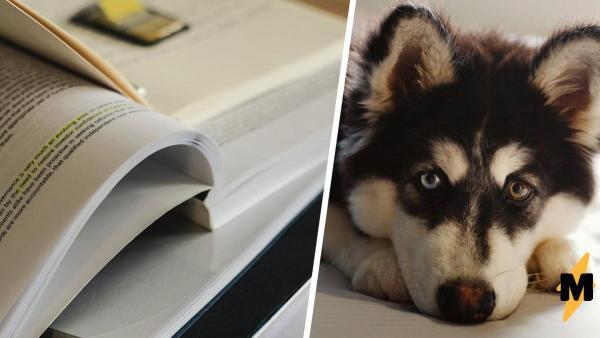 Хозяин поставил камеру, чтобы доказать учителю: домашку съедает пёс. Но вместо этого он узнал о предательстве