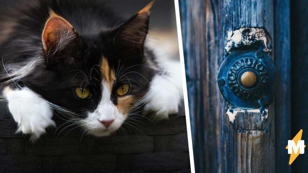 Девушка услышала звонок и взглянула, кто же ждёт за дверью.