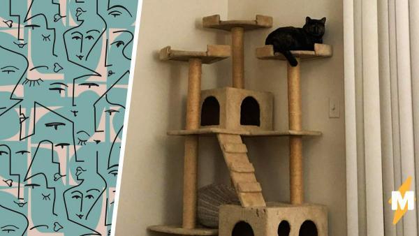 Собачница сфоткала кота и поняла, что сделала правильный выбор. Лучше не приближать его человеческое лицо