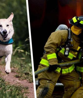 Спасателей развеселила собака, будто пытавшаяся что-то показать. Но стоило им последовать за ней, и смех стих