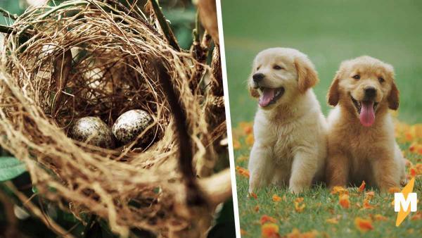 Сколько нужно собак, чтобы свить гнездо? Ответ узнала собач, когда нашёл в саду сюрприз от птиц