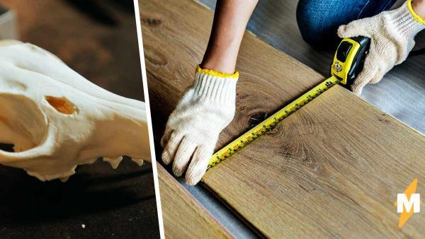 Пара ремонтировала дом и шутила, что найдёт там человека. Но стоило заглянуть под пол, как стало не до смеха