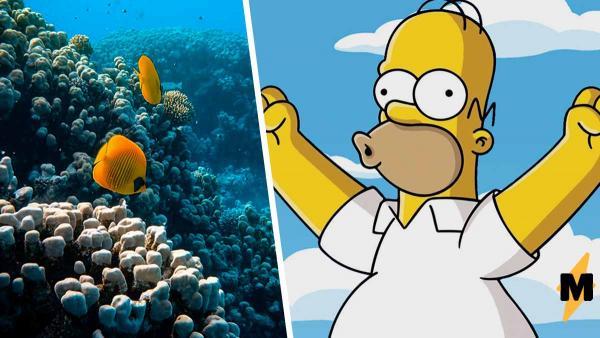 """Гомер Симпсон существует в реальной жизни, но от него вы не услышите знаменитое """"Д'оу!"""". Ведь он - рыба"""