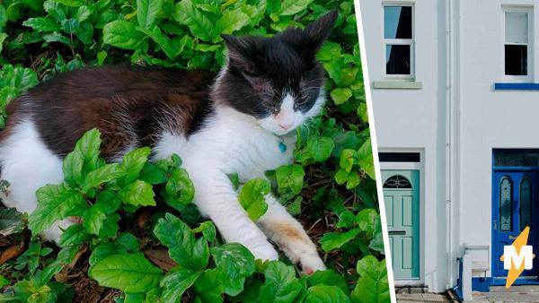 Девушка украла кошку соседа, но копы ей не страшны. Их в этом случае заинтересует лишь один человек - хозяин