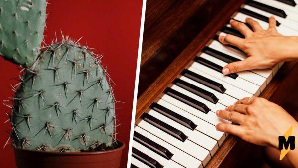 На Ибице появилось пианино, способное изменить музыкальный мир. В отличие от Моцарта, оно цветёт и пахнет