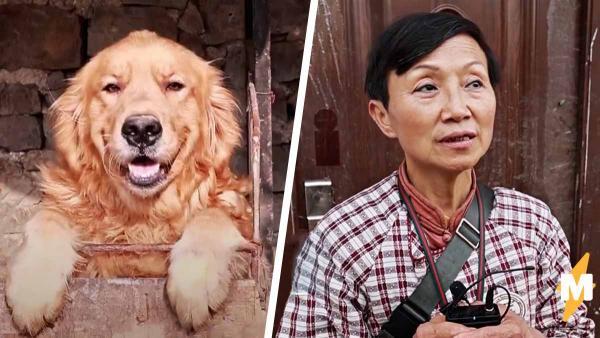 Старушка превратила свой дом в приют. Люди зовут её психопаткой, но 1000 собак готовы с этим поспорить