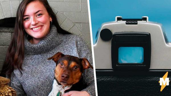 Девушка хотела поделиться видео со своей собачкой, но в итоге этот пёс словил бешеную волну хайпа