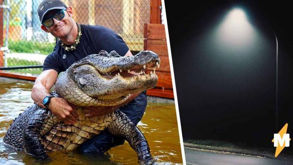 Любитель рептилий показал, как аллигаторы чиллят ночью. Но зрители от такого релакса лишь словили ужас
