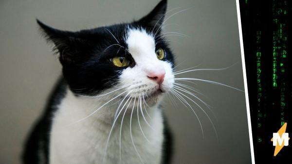 Хозяин искал кота-потеряшку через соцсеть, но сломал матрицу. Ведь теперь у него два питомца, и их не отличить