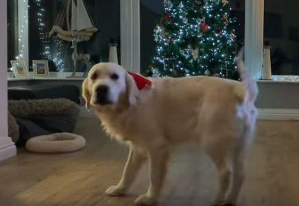Собакен устал от 2020го и попробовал себя в роли певца. Слов песни он не знает, да и кого это вообще волнует