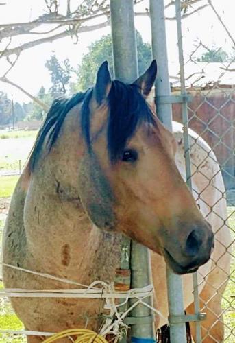 Девушка воспитывает целое лошадиное семейство и пишет об этом в соцсети. Получилось даже интереснее, чем Симс4