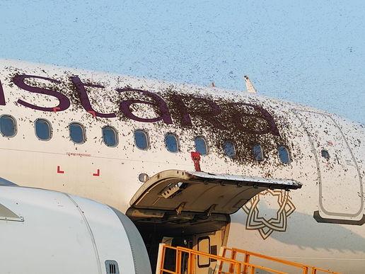 В аэропорту задержали рейс из-за зайцев, но без спасателей не обошлось. Безбилетники хотели полететь за бортом