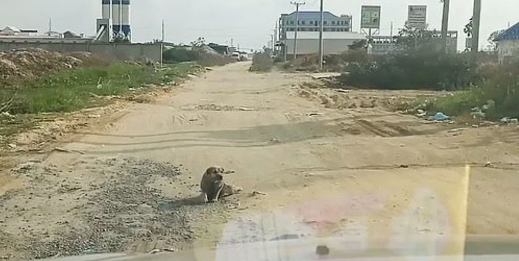 Водитель увидел парализованного пса, но зря пошёл помогать. Заметив камеру, собака показала чудо в духе Иисуса