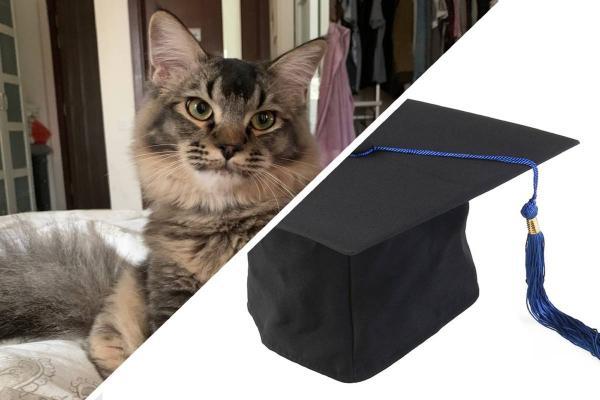 Парень закончил университет, но доказать это ему будет сложно. Ведь его кота образование привлекает сильнее