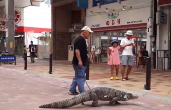 Счастливый брак или 40 лет жить с крокодилом? Мужчина сделал свой выбор и пока что ни о чём не жалеет