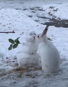 Случилось покушение на снеговика. Пушистый вор оставил ледяную скульптуру с носом (точнее, без)