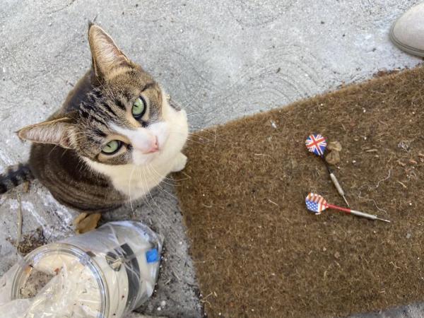 Подруга подарила девушке котёнка и жестоко обманула её. Внутри животного таился преступник-рецидивист