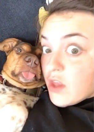 Девушка хотела поделиться видео со своей собачкой, а в итоге этот пёс словил бешеную волну хайпа