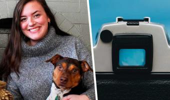 Хозяйка сняла видео, в котором показала своей собаке язык. Реакция пса заслуживает дебюта на шоу талантов