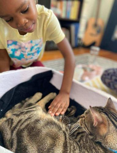 Женщина завела кошку