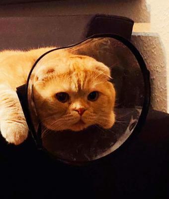 Девушка узнала диагноз питомца и удивила кошатников. Они и не думали, что пушистым тоже нужны антидепрессанты