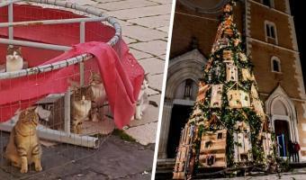 Горожане поставили новогоднюю ёлку, а коты забрали её. Но спорить с ними никто не стал — людям так даже легче
