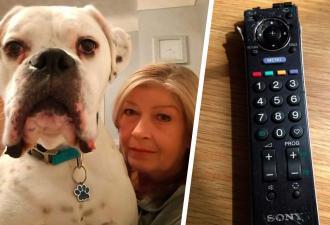 Пёс сгрыз вещи в доме, и хозяева посчитали убытки. Собака их разорила — на эти деньги можно купить новое жильё