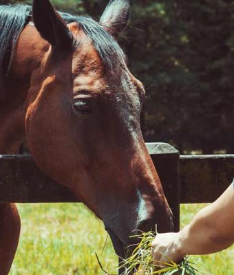 Хитрый муж ушёл гулять с пони и не вернулся обратно. Его нашли, но жене лучше не знать, почему без питомца