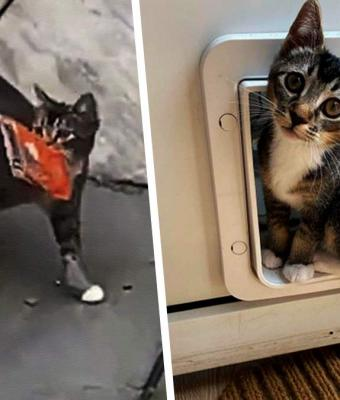 Кот сбегает из дома, а возвращается обратно с подарками. Они пугают семью, но с ними не страшен апокалипсис