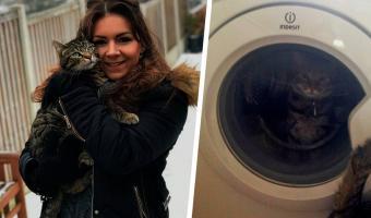 Кот поссорился с кошкой и придумал, как проучить её. Шалость удалась, но у пушистой на одну фобию стало больше