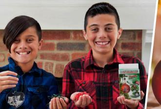 Братья нарядили ёлку, но разбили любимую игрушку бабушки. Их не поругали — осколки обогатили семью на миллионы