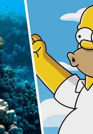 Гомер Симпсон существует в реальной жизни, но от него вы не услышите знаменитое «Д'оу!». Этот герой — рыба