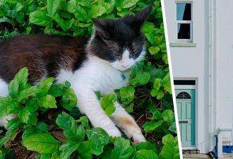 Девушка украла кошку соседа, но копы ей не страшны. Их в этом случае заинтересует лишь один человек — хозяин