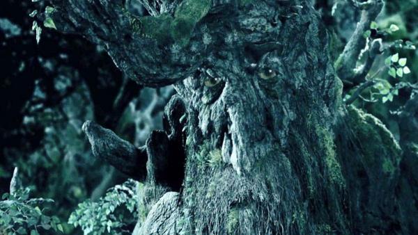 Иностранцы открыли для себя железное дерево в Казани. Теперь они знают, что чувствовал Пиппин при виде энтов