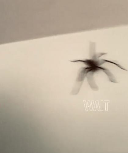 Тиктокер решил проверить, что будет, если поцеловать паука. Реакция того, что с лапками, была непредсказуемой