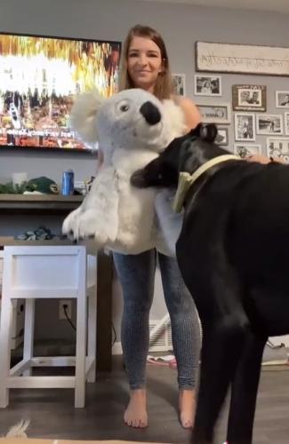 Девушка показала своих собак, но люди решили, что это лошади. Ведь псы такие огромные, что на них можно ездить