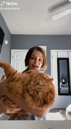 Гарфилд, это ты? Девушка показала своего кота, и люди поняли: это копия любителя лазаньи из мультика